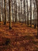 Forest on hill increased from early morning autumn foggy background. First sun rays. — Stock Photo