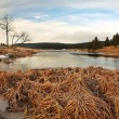 Winter view over lake with thin blue ice to opposite bank. Dry old stalks of grass and reeds on the bank, dark blue and green needles tree, naked leaves tree. — Stock Photo #37884511