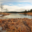 Winter view over lake with thin blue ice to opposite bank. Dry old stalks of grass and reeds on the bank, dark blue and green needles tree, naked leaves tree. — Stock Photo