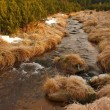 Mountain stream at beginning of winter time, old orange dry grass on both banks, ice on boulders and stone in the water. — Stock Photo #37884569