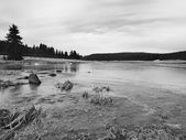 Winter view over lake with thin blue ice to opposite bank. Dry old stalks of grass and reeds on the bank, dark blue and green needles tree, naked leaves tree. Black and white photo. — Stock Photo