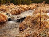 Bergbeek aan begin van de winter tijd, oude oranje droog gras op beide oevers, ijs op keien en stenen in het water. — Stockfoto
