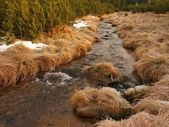 Mountain stream at beginning of winter time, old orange dry grass on both banks, ice on boulders and stone in the water. — Stockfoto