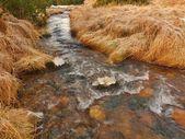 Gebirgsbach zu beginn des winter zeit, alte orange trockenes gras an beiden ufern, eis auf felsen und steine im wasser. — Stockfoto