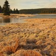Winter view over frozen water level of lake, few boulders sticking out from the ice. Dry old stalks of grass and reeds on the bank, dark blue and green needles tree, naked leaves tree. — Stock Photo