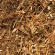 Fresh wet wood chip from alder tree, nature texture — Stock Photo #43329563