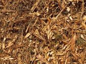 Fresh wet wood chip from alder tree, nature texture — Stock Photo