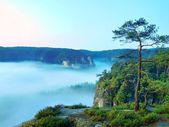 Morning view over rock and fresh green trees to deep valley full of light blue mist. Dreamy spring landscape within daybreak after rainy night. Blue pink sky on horizon, the sunrise start in minute. — Stock Photo
