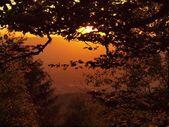 Bekijken via beuken takken met zonsondergang en diepe vallei bossen hieronder — Stockfoto