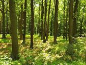 A hot afternoon in a glade, wilted plants with bent light green leaves. Background dark beech forest — Stock Photo