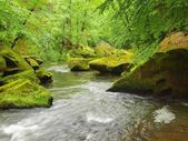 View to mountain stream below fresh green trees. Water level makes green reflections. The end of summer at mountain river. — Stock Photo