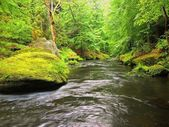 Mountain river with big mossy boulders in stream. Branches of trees with fresh green leaves. Fresh spring air in the evening after rainy day. — Stock Photo