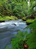 Water level under fresh green trees at mountain river. Fresh spring air in the evening after rainy day. — Stock Photo