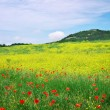 Beautiful Landscape with flowers. Spring flower meadow.  — Stock Photo