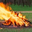 Burning bonfire in the forest  — Stock Photo