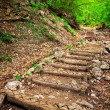 Wooden steps in forest. Stairway to jungle — Stock Photo