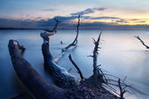 Snag in water. Nature composition. — Stok fotoğraf