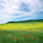Beautiful Landscape. Field in Crimea. Beautiful landscape with f — Stock Photo #29876723