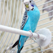 Stock Photo: Parrot in the cage