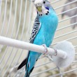 Parrot in the cage — Stock Photo #30043373