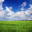 Stock Photo: Beautiful landscape with green meadow and cloudy sky. Compositio