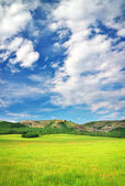 Green meadow in mountain. Composition of nature. — Stock Photo