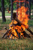 Bonfire in the forest — Stock Photo