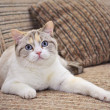 Beautiful cat lying on the sofa  — Stock Photo