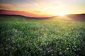 Beautiful landscape with sunset sky and field. — Stock Photo