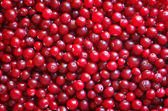 Red ripe cranberries. Red fresh cranbierry background and textur — Foto Stock