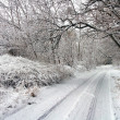Winter road in snowy forest.  — Foto de Stock
