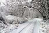 Winter road in snowy forest. — Stock Photo
