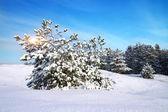 冬の風景です。自然の組成. — ストック写真