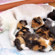 Stock Photo: Adorable small kittens with mother cat.