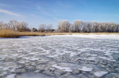 Winter landscape with reeds, trees, and frozen river — Foto de Stock