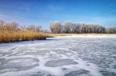 Winter landscape with reeds, trees, and frozen river — Stock Photo