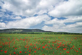 Beautiful Landscape. Field with red poppies. Field in Crimea.  — Stock Photo