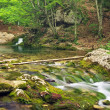 Mountain river in forest and mountain terrain. — Stock Photo