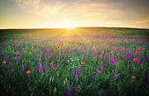 草、紫色の花と赤いケシのフィールド — ストック写真