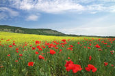 Beautiful Landscape. Field in Crimea.  — Stock Photo