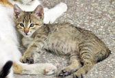 Homeless kitten lying beside his mother cat — Stock Photo