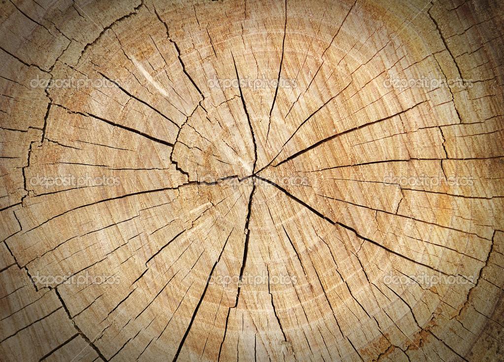 Texture du tronc d 39 arbre coup bois gros plan photographie es0lex 46201123 - Tronc d arbre coupe ...