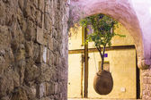Old Jaffa the hanging tree — Stock Photo