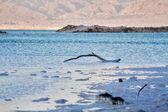 Beautiful coast of the Dead Sea . — Стоковое фото