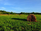 Haystack on green grass — Stockfoto