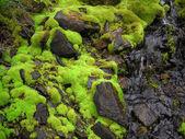 Fresco molhado natural verde musgo — Fotografia Stock