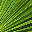 Green and fresh palmy leaf — Stock Photo