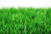 Gräs på vit bakgrund — Stockfoto