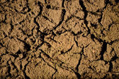 Parched river — Stock Photo
