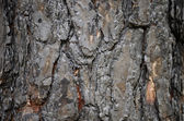 Charred bark — Stock Photo